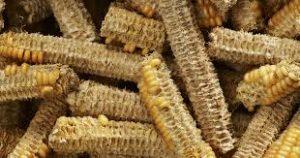 tongkol-jagung
