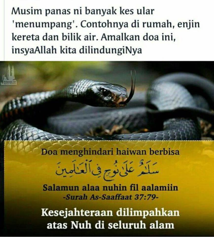 doa hindari haiwan berbisa